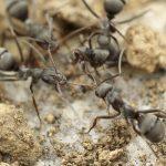 Mrówki i piaskownica przydomowa